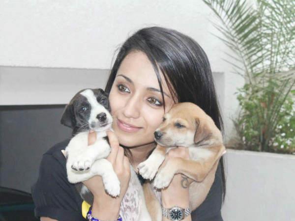 Trisha Pet Animals