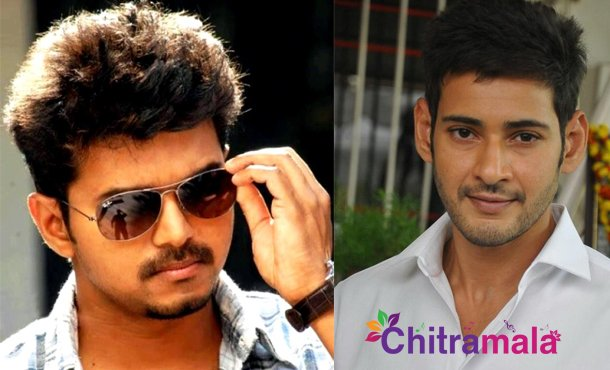 Vijay in Mahesh Babu Movie